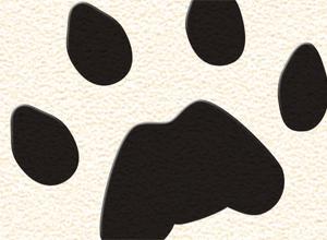 Thumbnail of Kung Fu Panda 2 Certificate